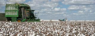 Cotton-slider